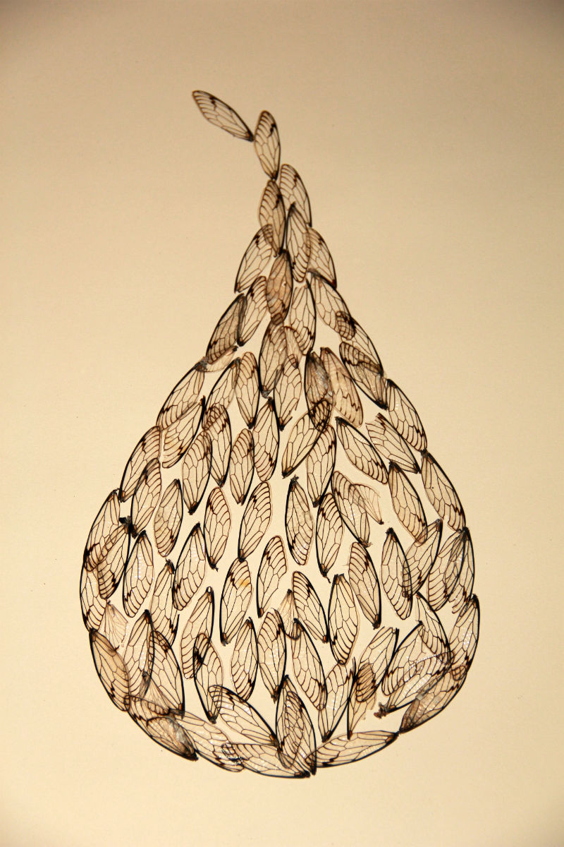 Pear wings