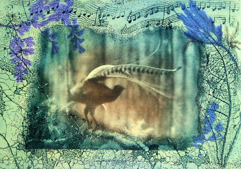 Solar etching lyrebird